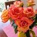 Hilary's roses