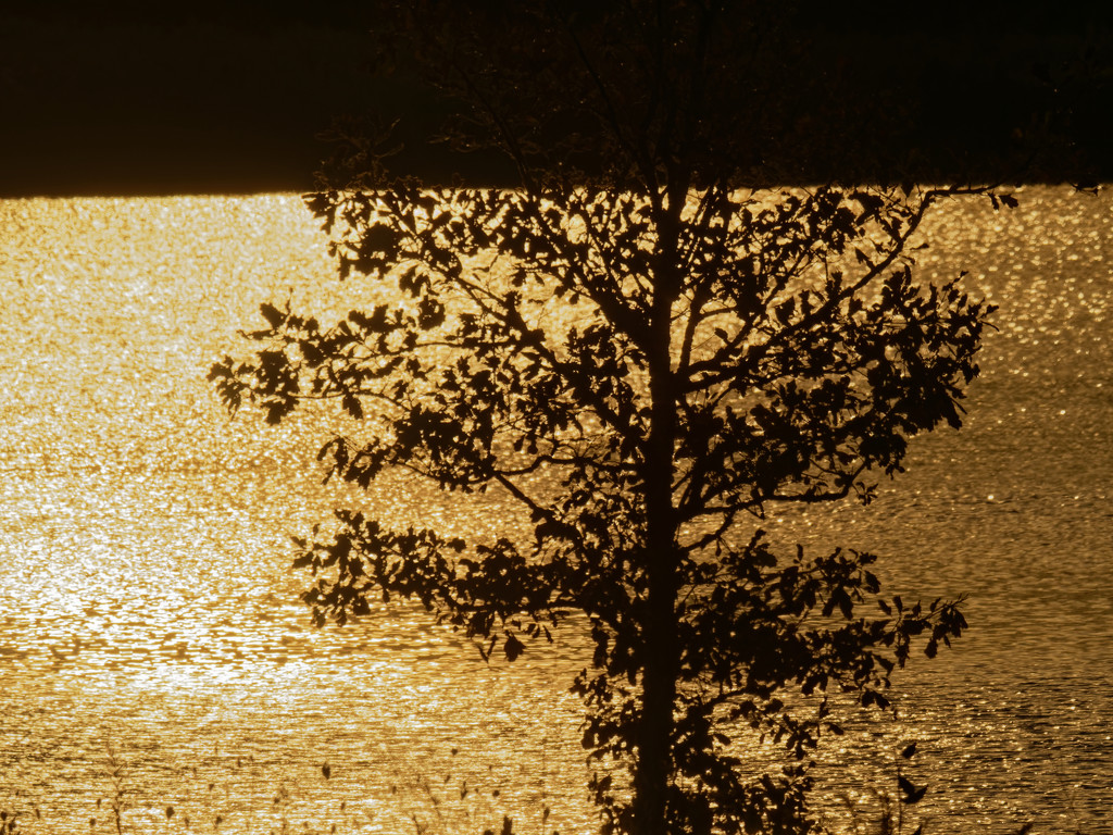 tree and reflected sun by rminer