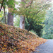 The Road and the Leaves