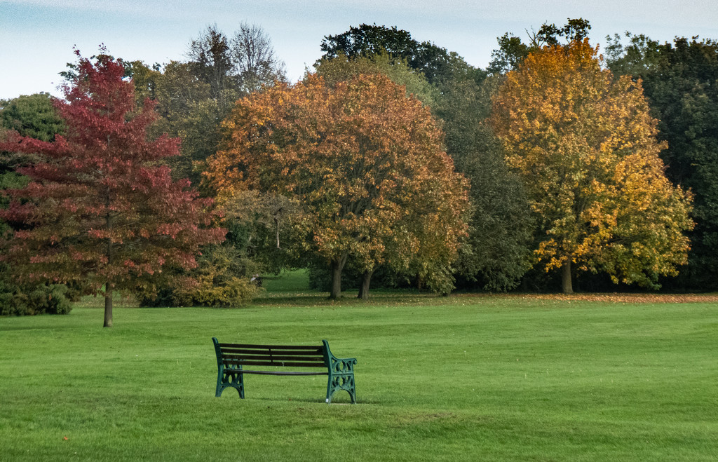 Autumn in the park by mave