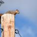 High Atop the Power Pole