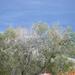 Montana Winter Sky Preview