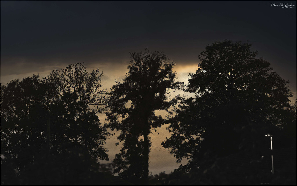 Evening Silhouettes by pcoulson