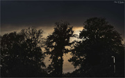 19th Oct 2020 - Evening Silhouettes