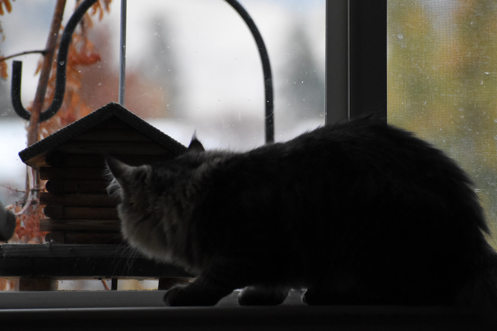 Stalker Cat by bjywamer