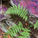Ferns and Graffiti