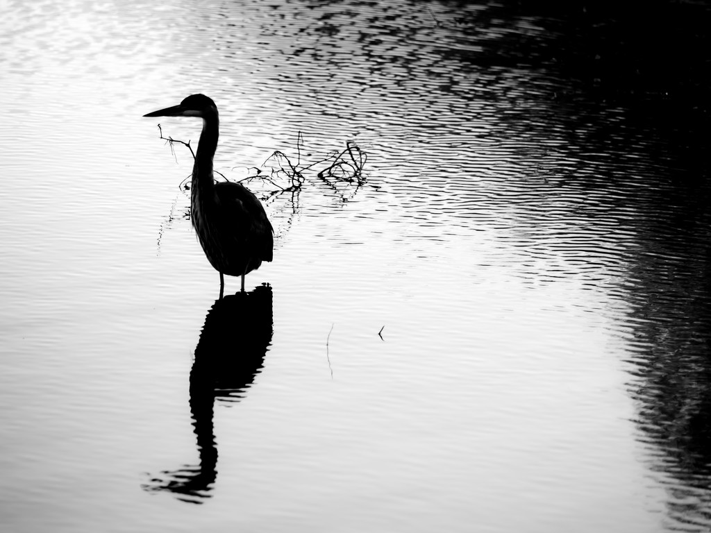 heron silhouette by northy