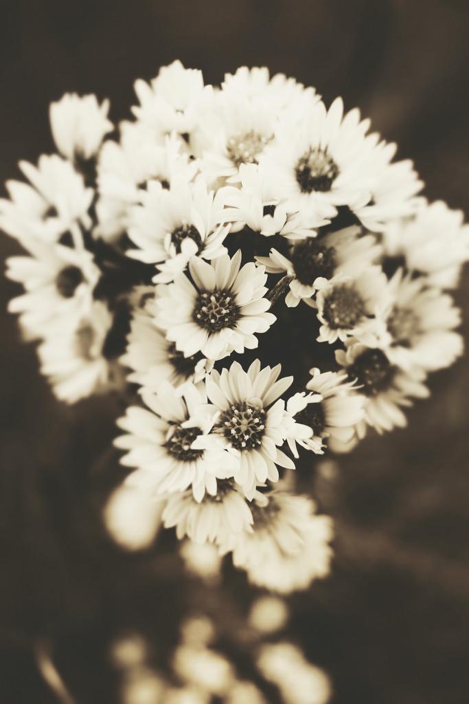 Late Bloomers by juliedduncan