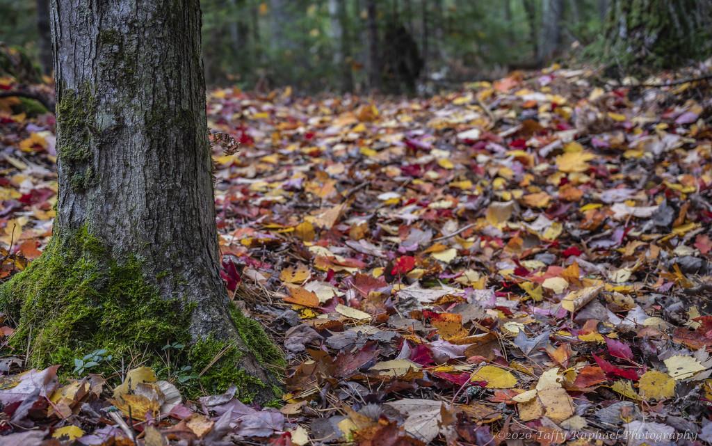 Autumn Forest Floor by taffy