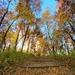 Fall Footpath