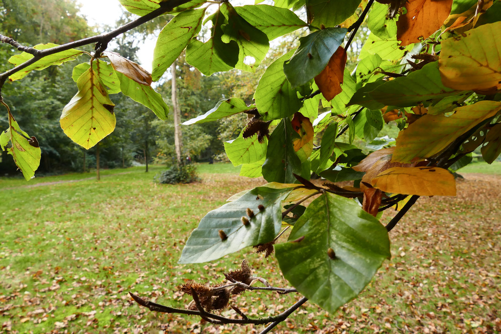 autumn in the wood by marijbar