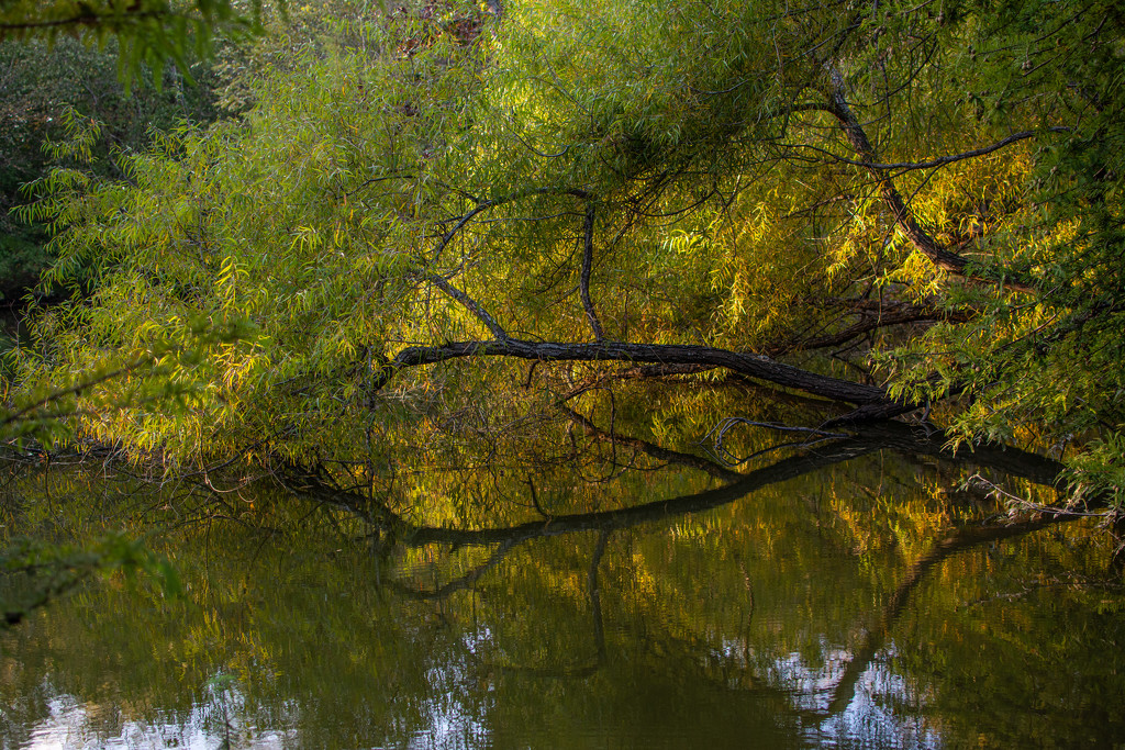 Reflected colors... by thewatersphotos