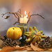 Pumpkins and Pine cones.