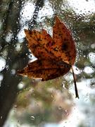 19th Oct 2020 - Autumn window