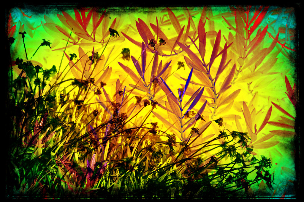 Abstract weeds  by kathyboyles