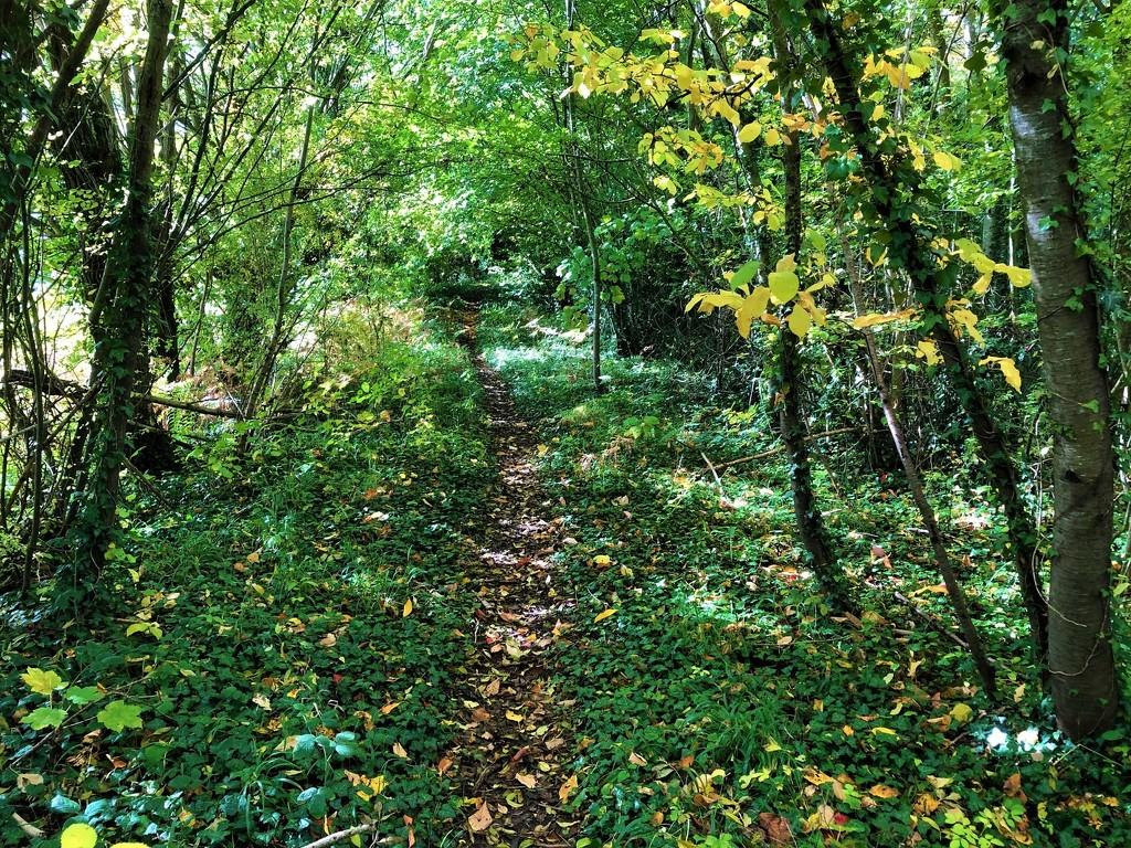 A Leafy Path by susiemc