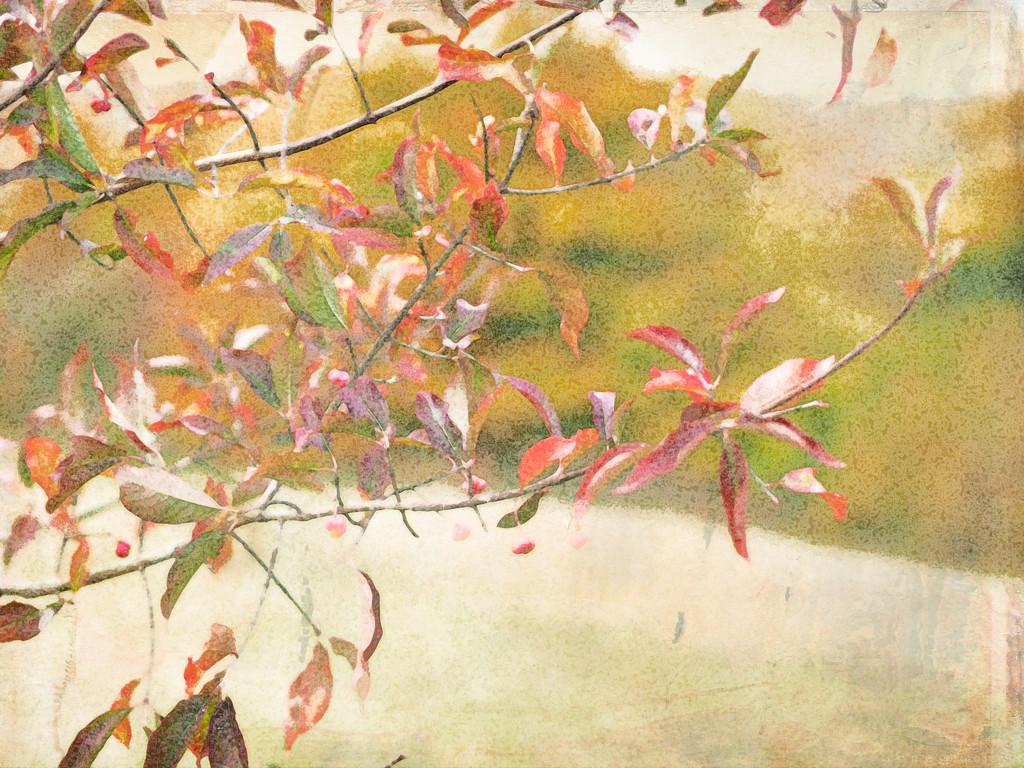 leaves watercolour by pistache