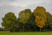 20th Oct 2020 - Stages of autumn