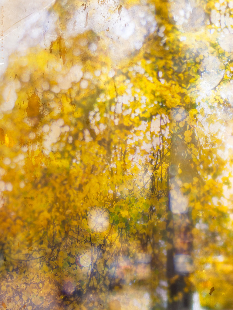 autumn gold by pistache