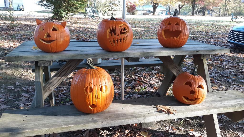 Pumpkins by julie