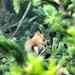 Cute little red squirrel.