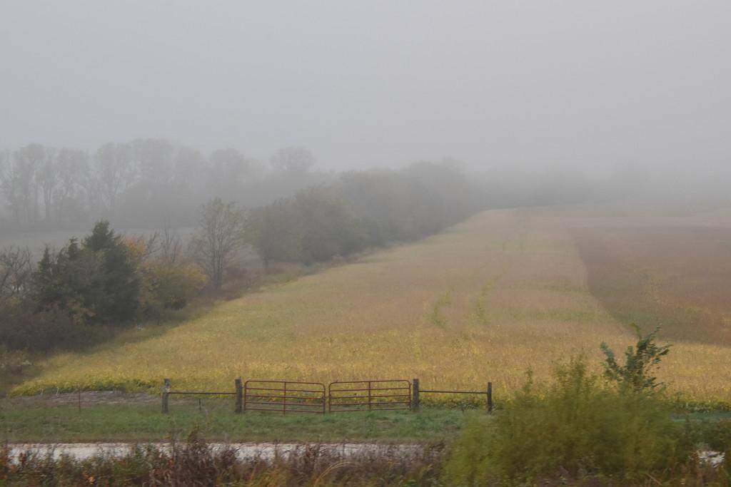 Foggy Autumn Morning by genealogygenie