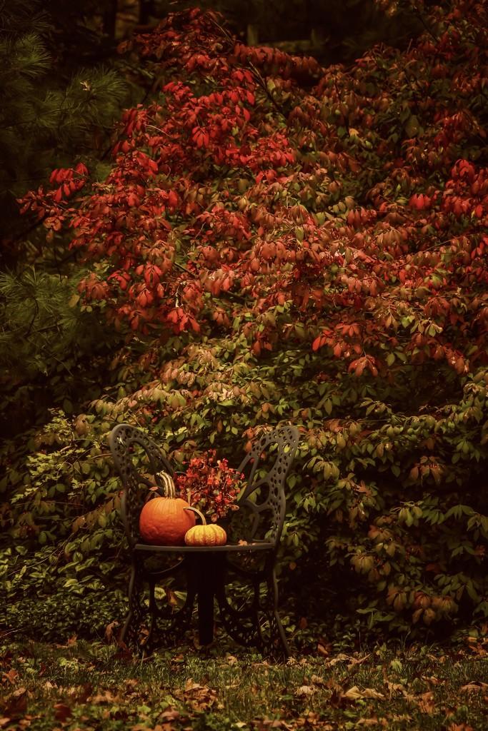 Pumpkin Time  by mzzhope