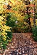17th Oct 2020 - Fall Walk