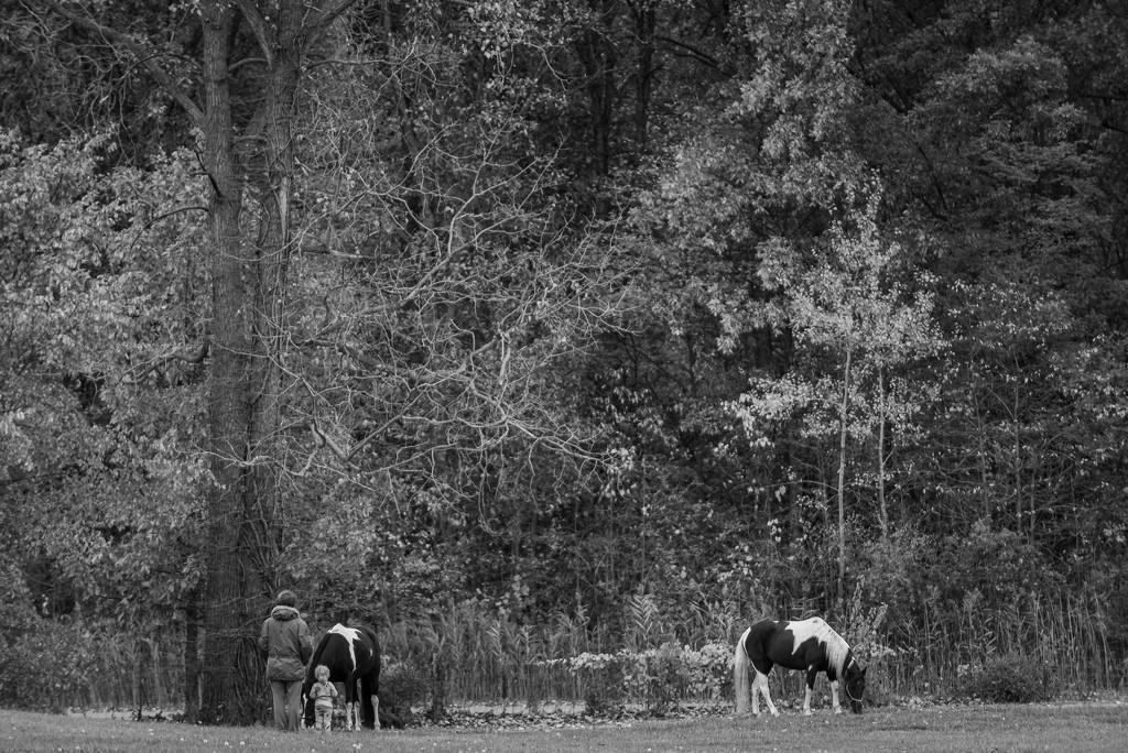 wild horses... by jackies365