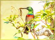 17th Oct 2020 - Double collared Sunbird