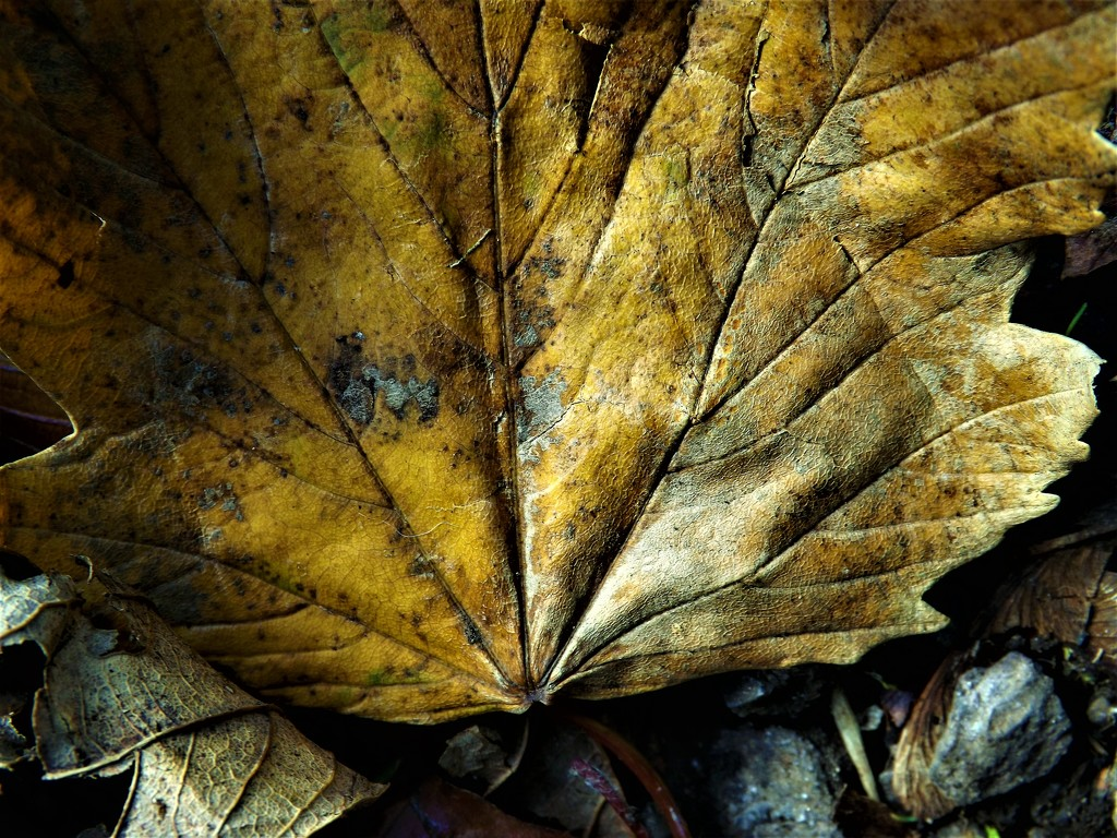 A Leafy Place by ajisaac