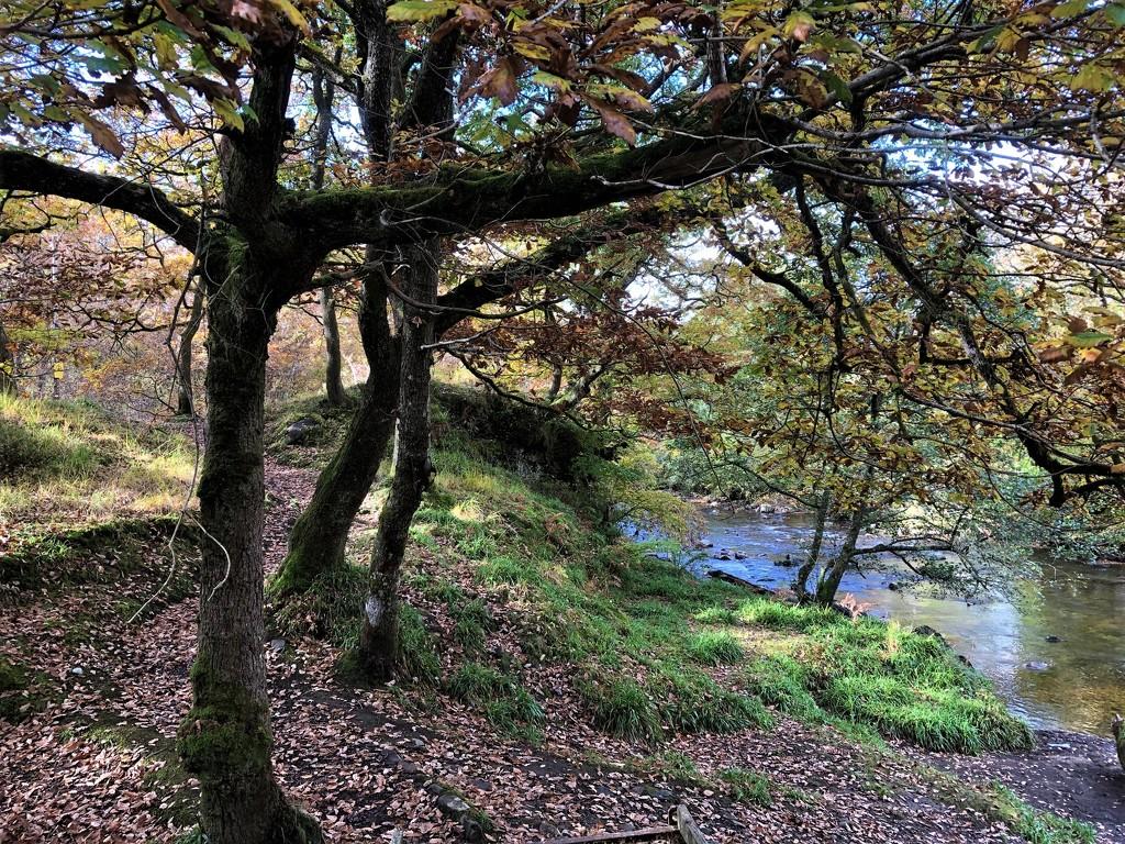 Woodland Walk by susiemc