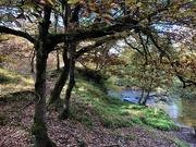 21st Oct 2020 - Woodland Walk