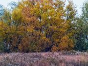 21st Oct 2020 - autumn prairie