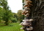 21st Oct 2020 - Fungi on one side