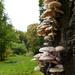 Fungi on one side