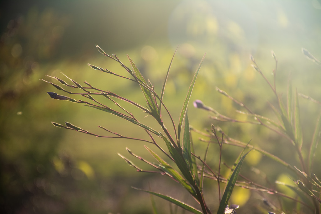 In the sun... by thewatersphotos