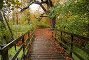21st Oct 2020 - A walk in the rain