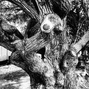 21st Oct 2020 - Trees of Keurboom #6