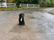 21st Oct 2020 - I don't like the rain granny!