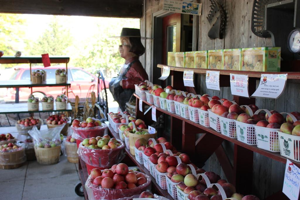 Apple Day by spanishliz