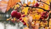 21st Oct 2020 - Autumn colours in in rain