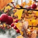 Autumn colours in in rain