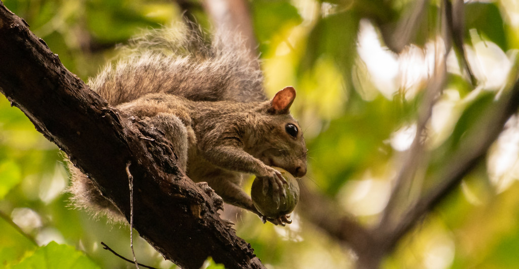 Squirrel Getting Ready to Snack! by rickster549