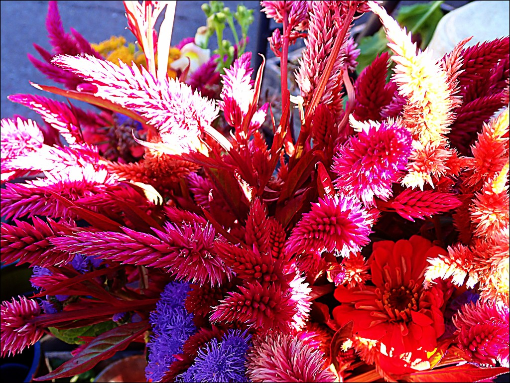 Fall Colors at the Farmer's Market 3 by olivetreeann