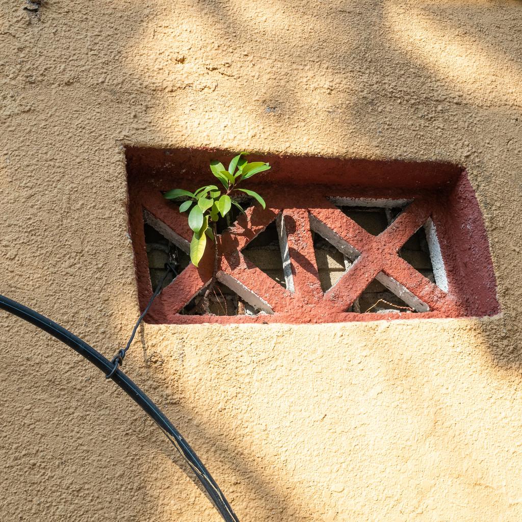 Weeds grow anywhere by ianjb21