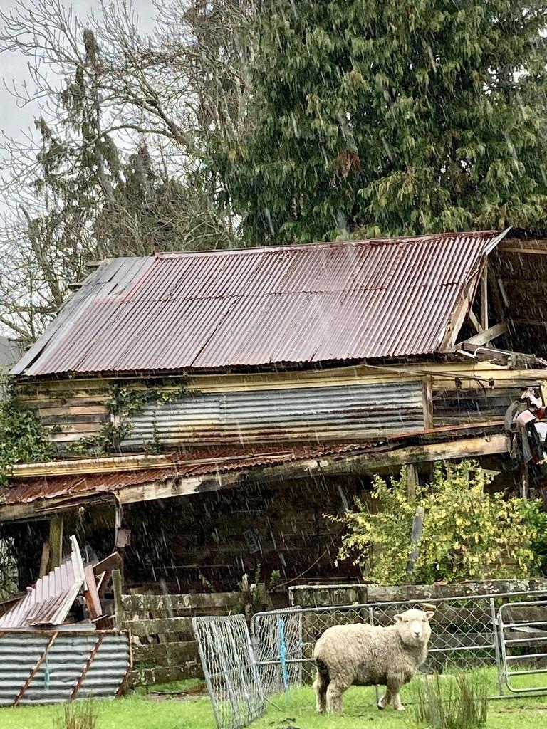 Raining and Rusty by kiwinanna