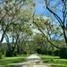 Tree lined avenue Totaranui Beach