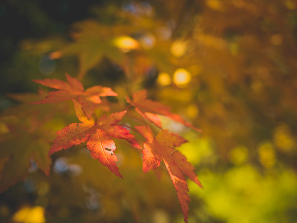 Acer by newbank