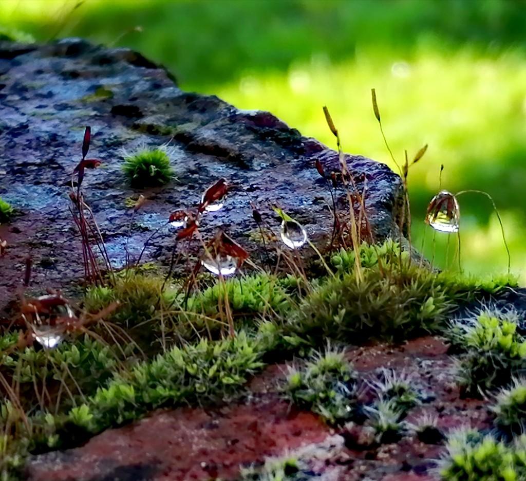 Moss on my wall by flowerfairyann